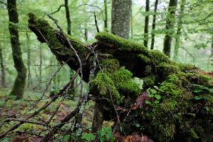 Wald_Beuron
