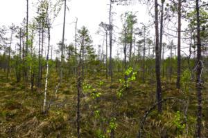 Wald im Morrast