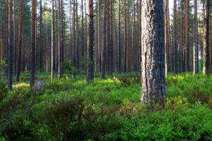 Wald am Mökki